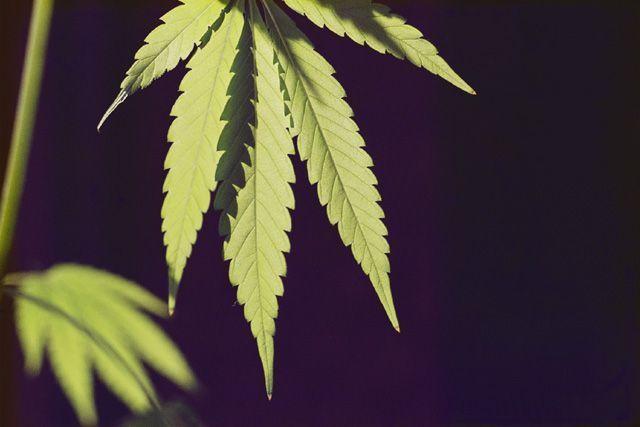Informazioni sui vari tipi di droghe - I diversi tipi di droga ...